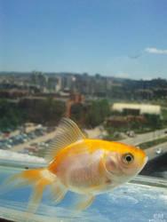 Fish by XoN1
