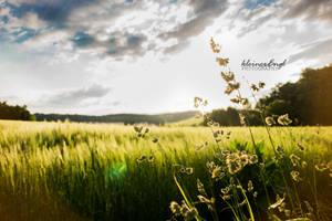 barleyfield by kleinerEngl