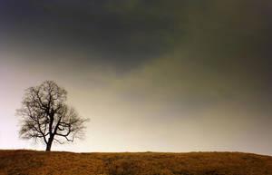tree. by grepov