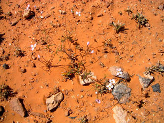 Flowers that Bloom in Adversity (4) by Syltorian