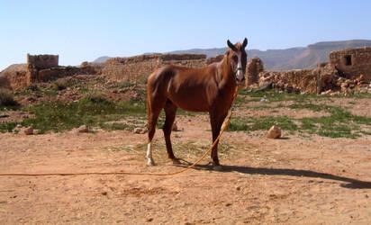 Desert Horse by Syltorian