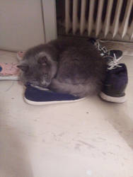 Just a cat and his shoes by Mits-Giotix