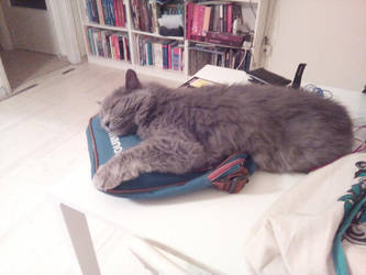 A cat and his bag by Mits-Giotix