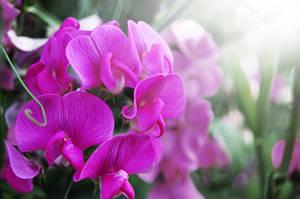 Flower stock by Cheezen