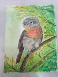 water color bird by Rikuroy-madara