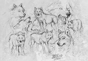 wolf_sketches. by Lady2