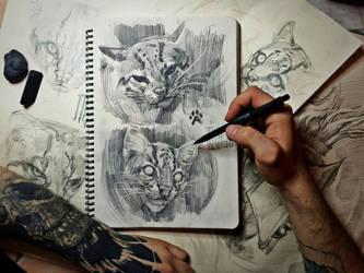 Ocelot sketch by EGOR-DOG