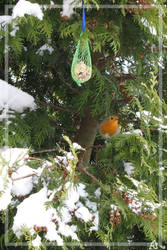 Robin by meeko-okeem