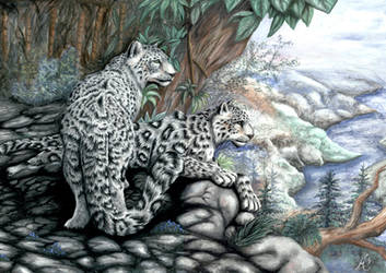 snow leopards by meeko-okeem