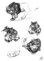 Tiger random stuff by meeko-okeem