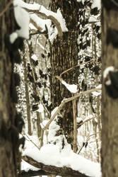 Through the Trees by VertigoArt