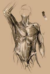 Anatomyir by gammathree