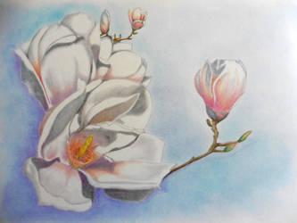 Magnolia by Ahau2