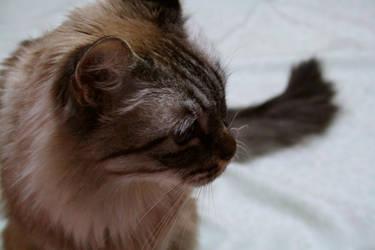 fur by decalcomanie