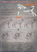 Canis Lumen guidance Part III Anatomy by areot