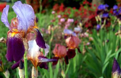 Garden by spineglue