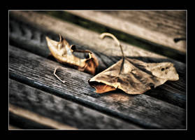 Tattered and Torn by jessicarock