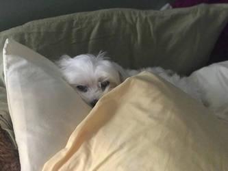 Pillow Bed by SabrinaOfNightClan