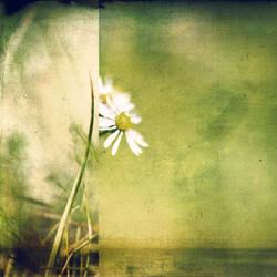 Memory of Summer by MartinStranka