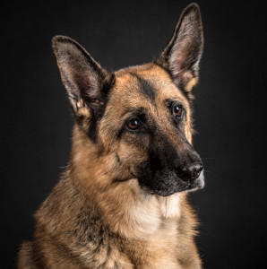 Miss-Dog-Lover's Profile Picture