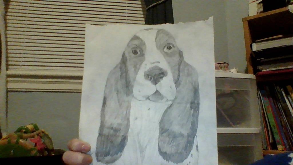A Basset Hound sketch by Miss-Dog-Lover