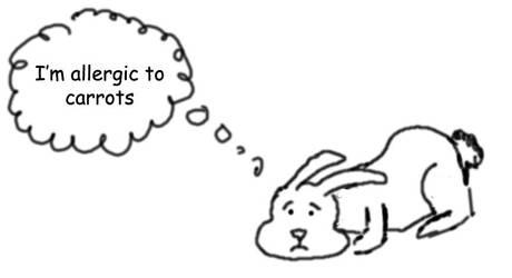 Sad Bunny by skeets011