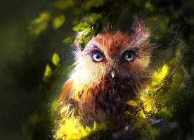 Owl by Zetsuboushi