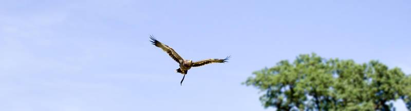 Flying Eagle #4 by TheOrigin79