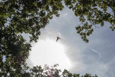 Flying Falcon by TheOrigin79