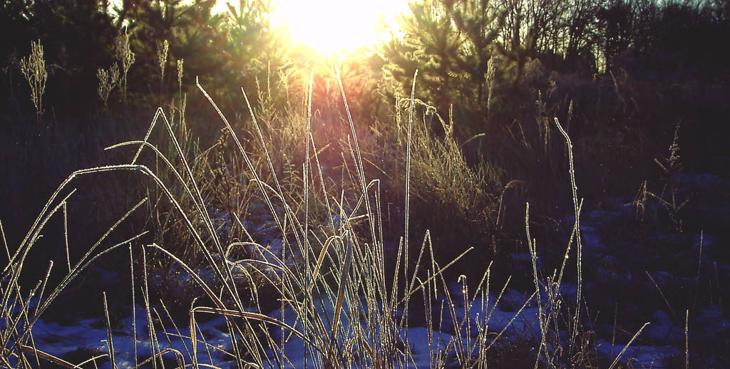 the Day awakens by poisen2014