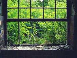 the Window is broken by poisen2014
