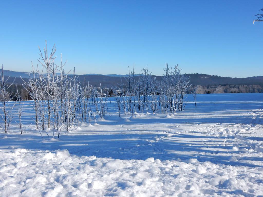 winter day by poisen2014