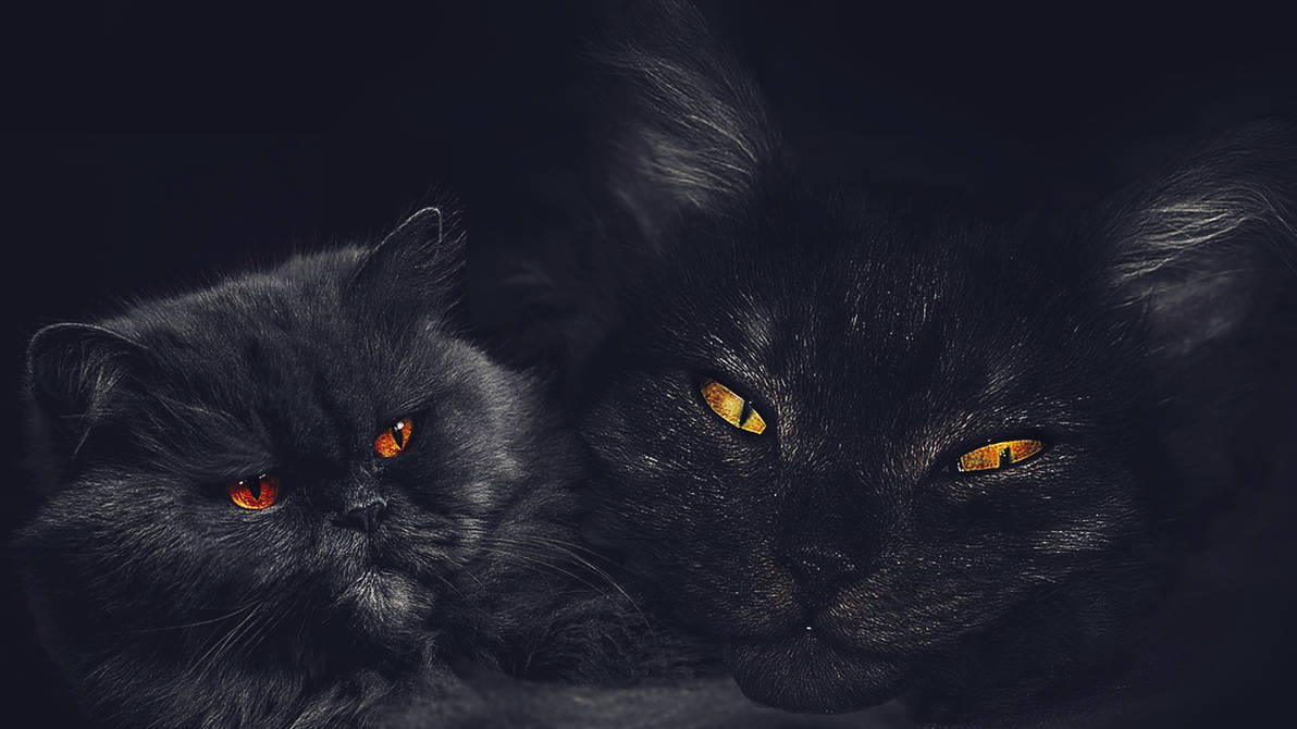 cats faces by poisen2014