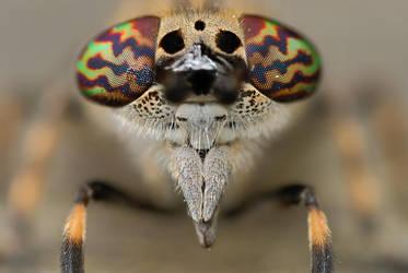 horsefly by MartinAmm