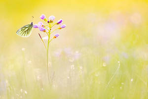 magic meadow by MartinAmm