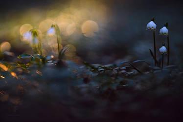 spot light by MartinAmm