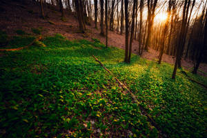 green floor by MartinAmm