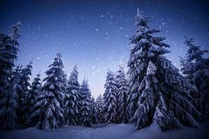 wintertime love II by MartinAmm