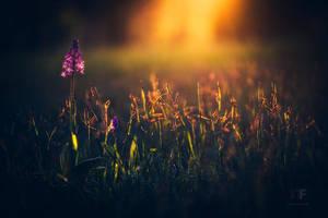 summer dream by MartinAmm