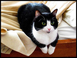 Cat by ECKSbloodECKS