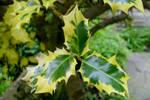 Macro leaves by richardnorth