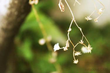 Spring by aurorapop