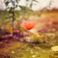 Miss lonely by FotosEingefangen