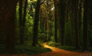 Path to my dreams by CarlaSophia