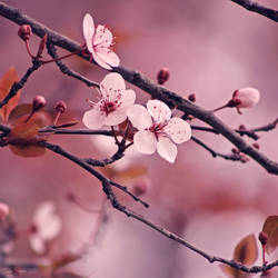 Soft side of Spring IV by CarlaSophia
