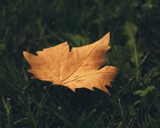 Autumn I by CarlaSophia