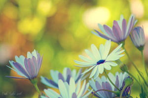 Day 7 - Spring by CarlaSophia