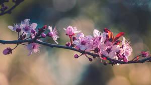 Day 11 - Blossom by CarlaSophia