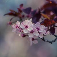 Day 13 - Blossom by CarlaSophia