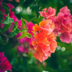 Autumn flowers  by CarlaSophia